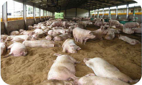 Treatment of Pigsty Facilities Effluent for 10 Different sites in Korea